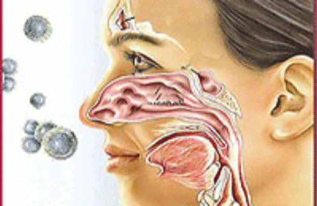 аллергия на пыль и бронхиальная астма
