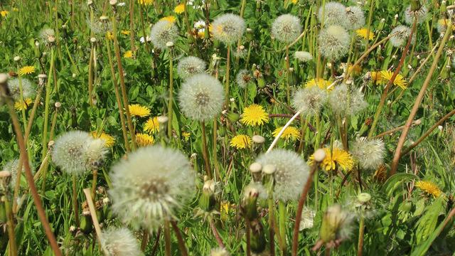 Поллиноз: когда весна не в радость