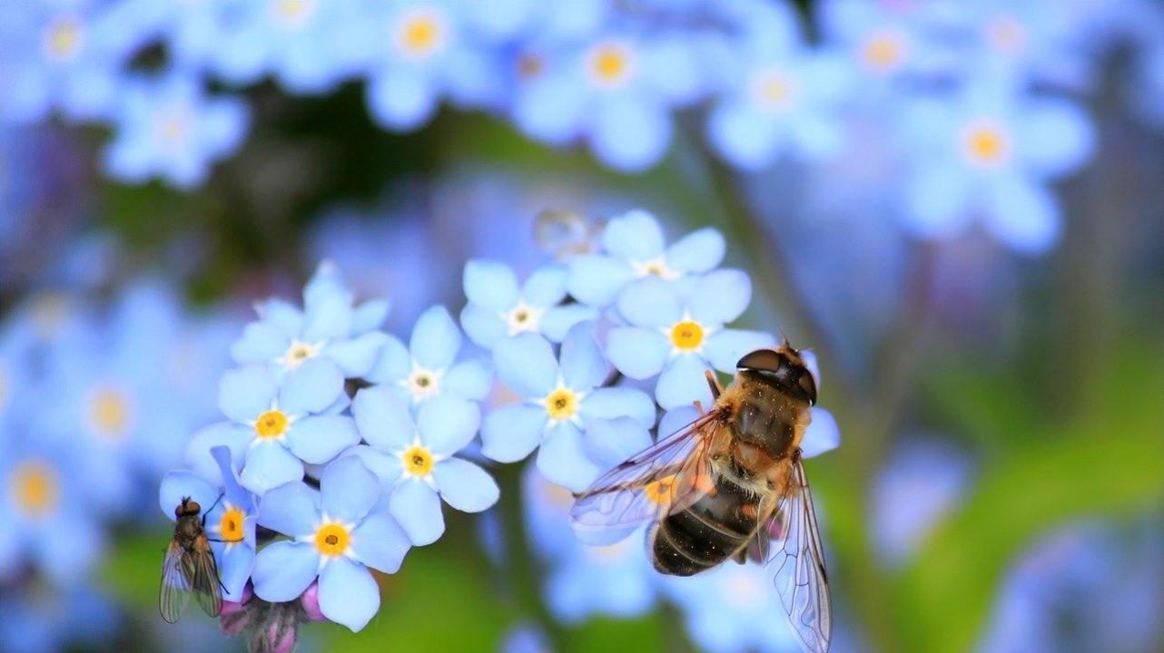 Аллергия на насекомых: от маленького укуса до больших проблем
