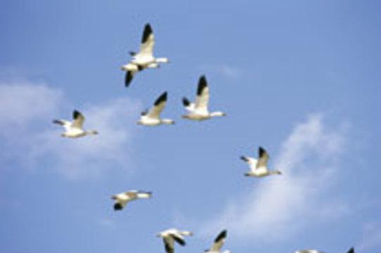 Вирус птичьего гриппа обнаружен в Азербайджане