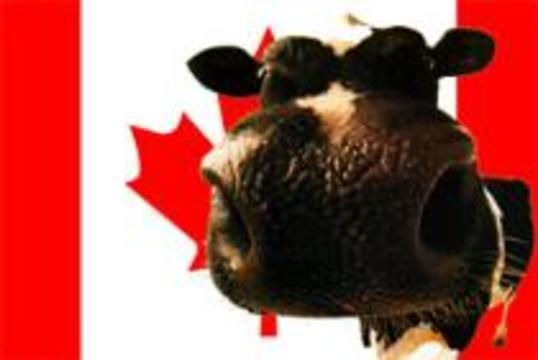 Канада подтвердила второй случай коровьего бешенства