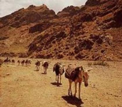 В Афганистане на три дня отложили гражданскую войну ради прививок
