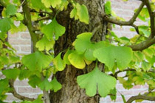 Популярная биодобавка увеличивает  риск инсульта