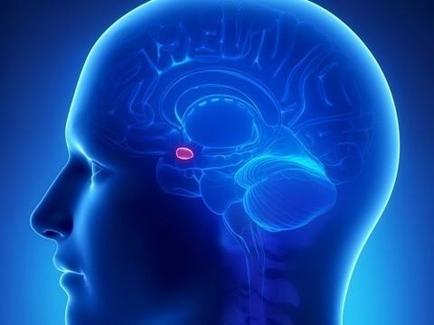 В головном мозге нашли [«выключатель» аппетита]