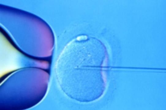 Яйцеклетки для ЭКО будут [выращивать в пробирке]
