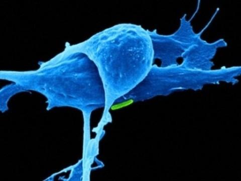 Кальций помогает иммунной системе [бороться с раком]