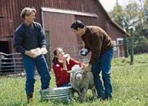 Научное открытие поможет животноводам и ветеранам химических войн