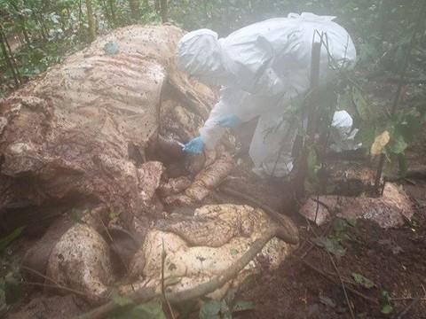 Неизвестный ранее возбудитель опасного заболевания обнаружен в Африке