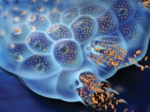 Ученые успешно испытали [модифицированный вирус для лечения рака]