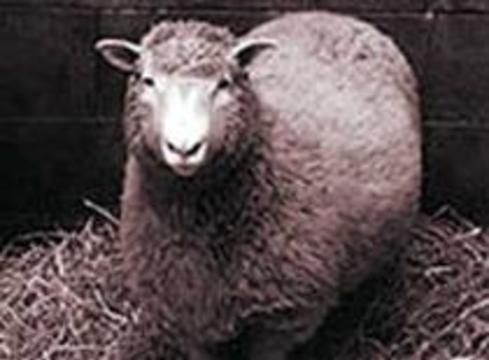 Чучело овечки Долли станет экспонатом эдинбургского музея