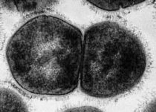 Ученые расшифровали гены стрептококка