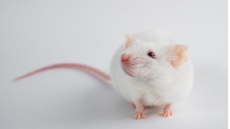 Генная терапия вылечила паралич после травмы спинного мозга у мышей