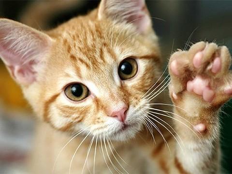 Котята не так безобидны, как может показаться