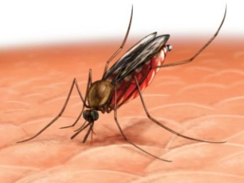 Эксперты усомнились в эффективности [новой вакцины от малярии]