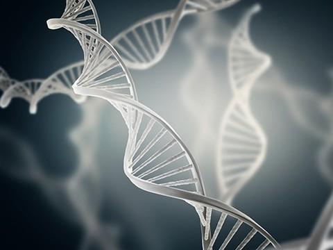 Ученые объяснили, как ДНК «защищается» от ультрафиолета