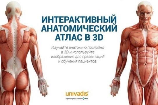 Доступная анатомия на Univadis