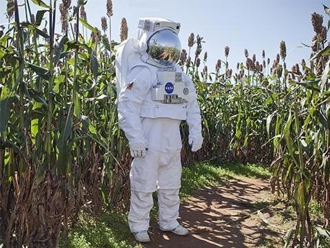 Растения, выращенные в марсианских условиях, можно есть