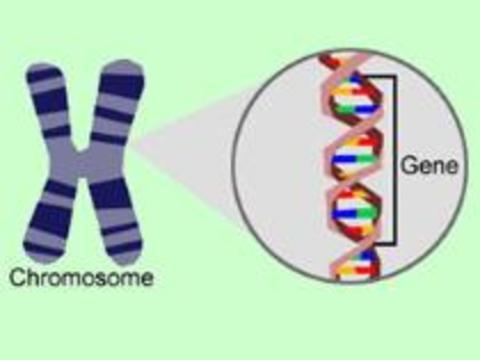 Ученые нашли способ обезопасить генную терапию