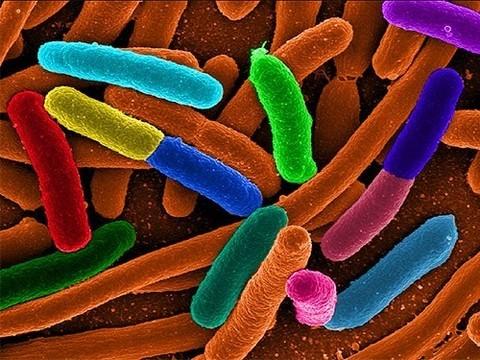 Суперустойчивые к антибиотикам бактерии стали еще более устойчивыми