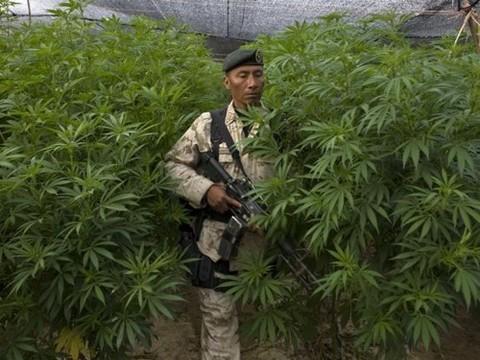 В Мексике не разрешили лечить марихуаной