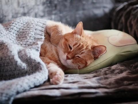 Хороший сон может защитить от тревожного расстройства