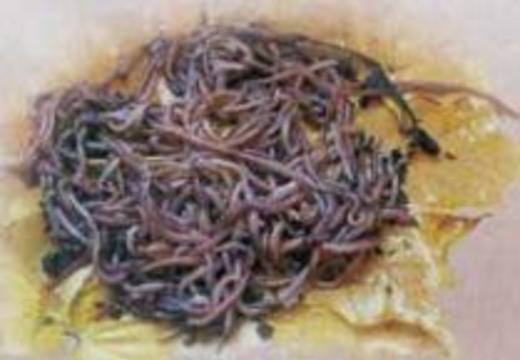 Напиток из живых червяков лечит кишечник