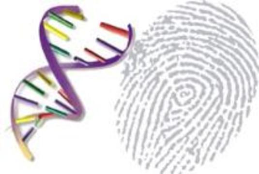 """Ученые предлагают создать глобальную базу """"отпечатков ДНК"""""""