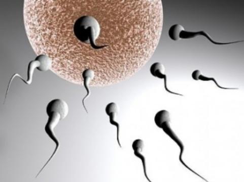 В Великобритании компенсации донорам яйцеклеток [увеличат втрое]