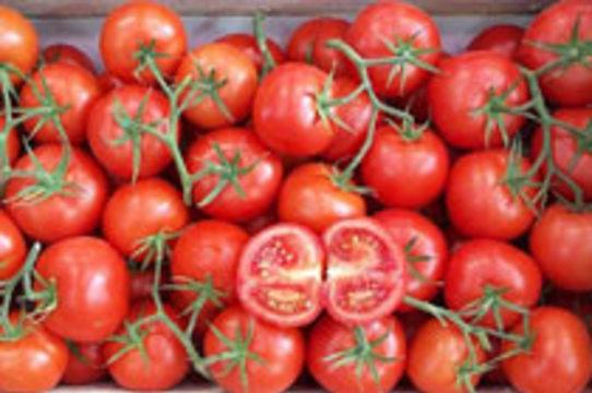 На прилавках британских магазинов появились «противораковые» помидоры