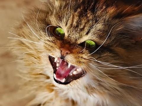 Редкий случай синдрома Капгра: пациент считал, что ФБР заменило его кота двойником