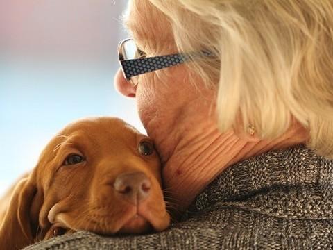 Домашние животные могут помочь пожилым людям справиться с хронической болью