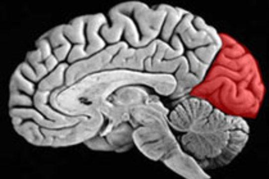 Зрительные отделы мозга [помогают слепым слышать]