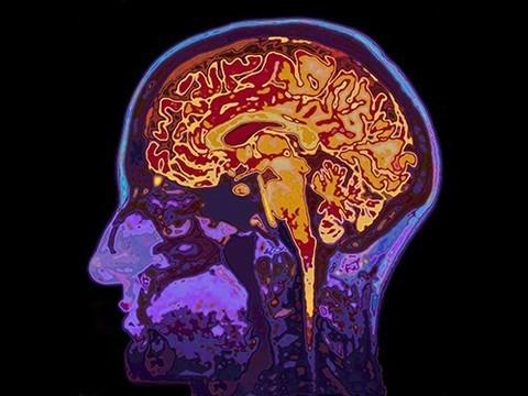 Мозг многих людей считает неправильные поступки невозможными