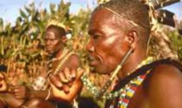 Рак будут лечить корой африканского дерева