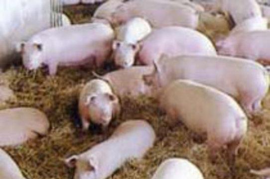 На европейских фермах [вырос суперустойчивый микроб]