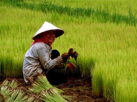 10 миллионов китайских крестьянок проверят на [рак шейки матки]