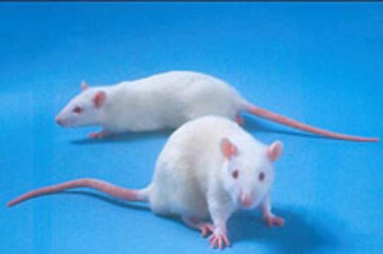 Австралийцы научились [выращивать трехмерные органы in vivo]