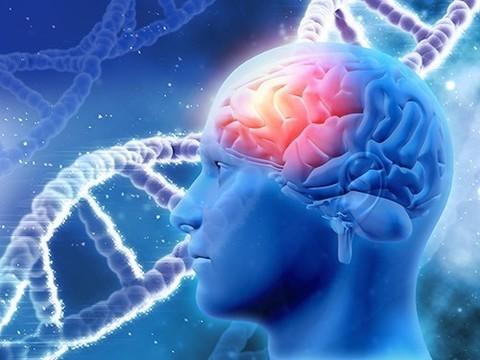 Мутации гена BRCA1 связаны не только с раком молочной железы, но и с болезнью Альцгеймера