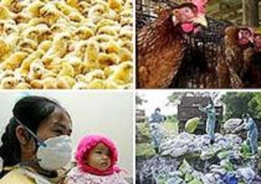 От птичьего гриппа скончалась еще одна жительница Вьетнама