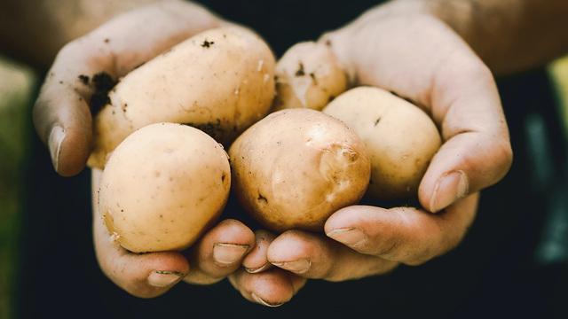 5 полезных свойств картофеля, о которых вы не догадывались