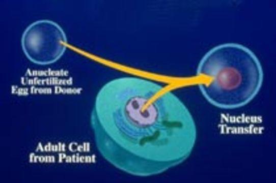 [Паркинсонизм у мышей вылечили] с помощью терапевтического клонирования