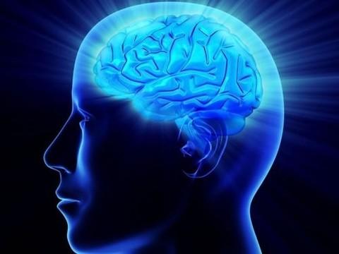 Жирная пища может [замедлить старение мозга]