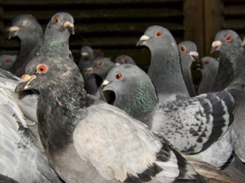 Зарегистрирован третий в 2012 году [случай смерти от птичьего гриппа]