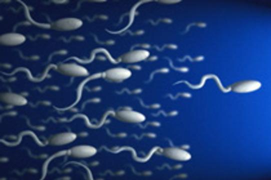 Открыт механизм гиперактивности сперматозоидов