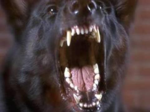 Московские ветеринары поместили в карантин [десятки бродячих собак]