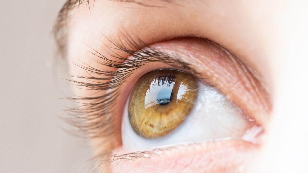 Ученые собрали сетчатку глаза из стволовых клеток и «лотка для льда»