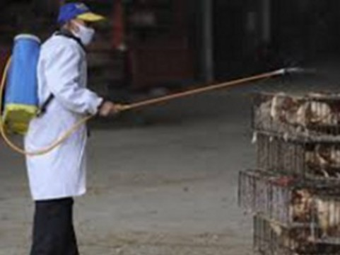 Число заболевших птичьим гриппом китайцев [за двое суток выросло на треть]