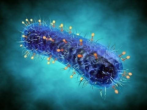Вирусы-бактериофаги общаются между собой