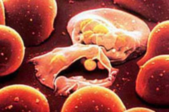 Швейцарская компания заявила об успешных испытаниях [вакцины от малярии]