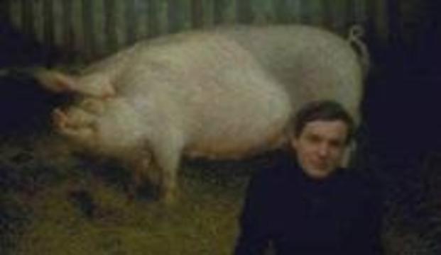 В Австралии человека пытаются скрестить со свиньей
